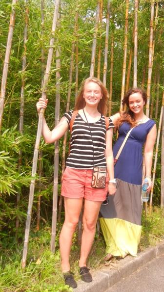 A Bamboo garden!